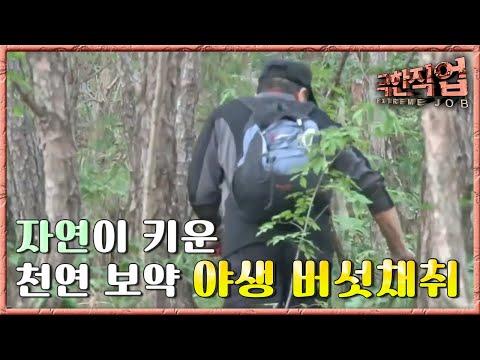 극한직업 - Extreme JOB_자연산 버섯 채취_#001