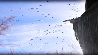 Goose Hunting on the X -- My BEST Hunt EVER!!