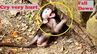 Million heart breaking! Poor Polino fall down ,cry very hurt under stone| All mistake is by Dolly