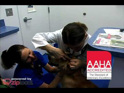 Caring Hands Animal Hospital - (703) 830-5700