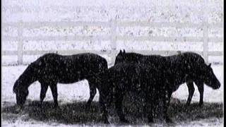 Sunny-Lonely Boy in the Snow.wmv