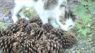 how to keep cats out of your yard mothballs in gas