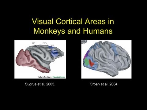 James Rilling - Human Brain Specializations Related to Language