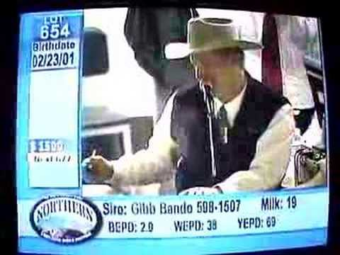 Crazy Livestock Auction Guy... Fastest Mouth in the South!