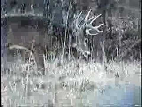 Amazing Deer Hunting Footage.... Video