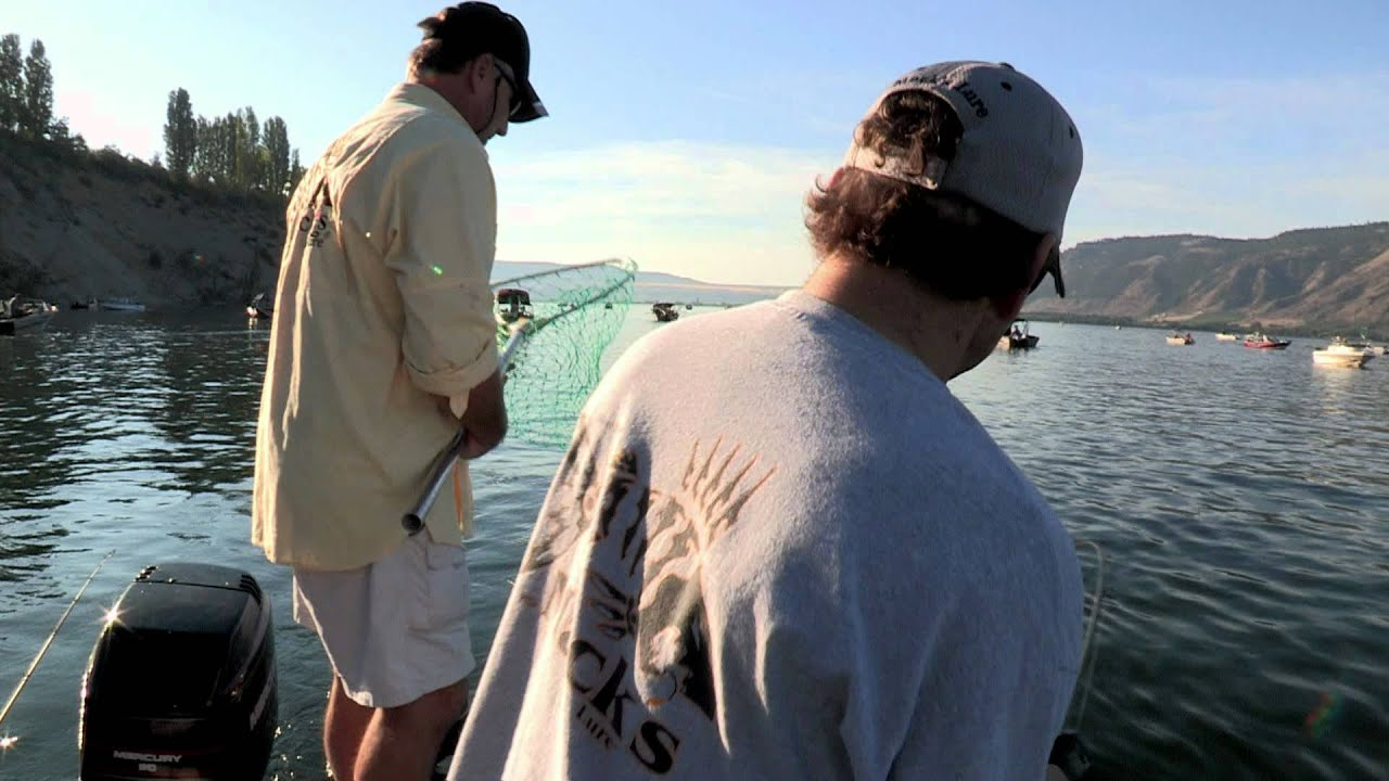 Columbia river brewster pool sockeye salmon fishing for Columbia river fish counts