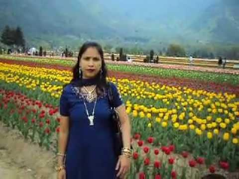 tulip garden srinagar