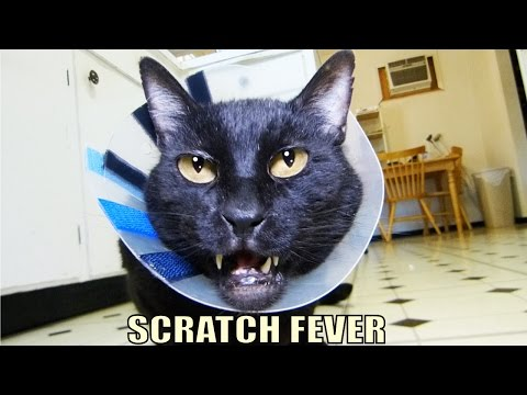 Cat Scratch Fever Original Song
