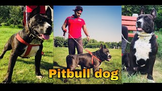 Cheapest Dog MARKET IN DELHI    WHOLESALE   RETAIL   Dogs in CHEAP PRICE WITH PHONE NUMBER🔥