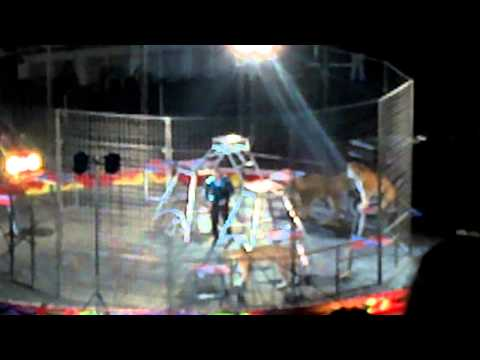 Tiger escapes at circus