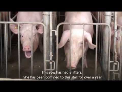 Tim Hortons: Stop Supporting Cruelty