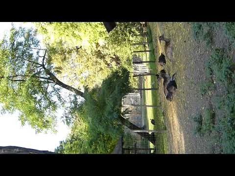 Margit island zoo