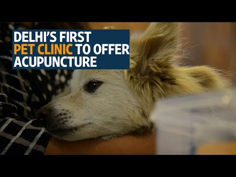 First pet clinic in Delhi