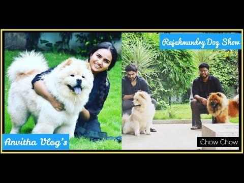 Rajahmundry Dog Show is Won By Chow Chow | Geddam Chinnodu & Jetty dollar | #AndhraPradesh | #Dogs
