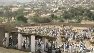 Eritrean Tigre Music - Zainab Bashir
