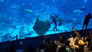 [Feeding Session] S.E.A Aquarium @Resort World Sentosa SINGAPORE.