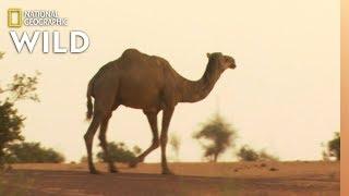 Which Animals Beat the Heat?   Animal Autofill