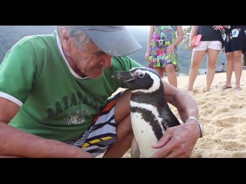 Penguin Returns Yearly to Visit Man Who Saved His Life