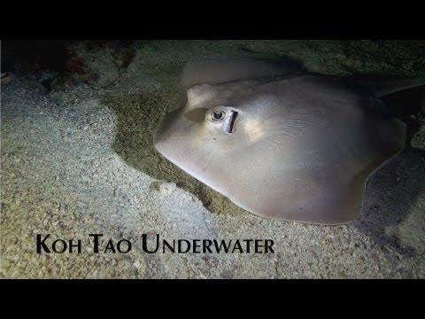 download lagu Koh Tao Underwater gratis