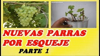 Como Reproducir Parras o Cepas De Uva Por Estaca 1ª PARTE // Grape vines from cuttings PART 1