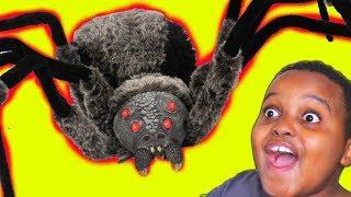 GIANT SPIDER vs Shiloh And Shasha - Onyx Kids