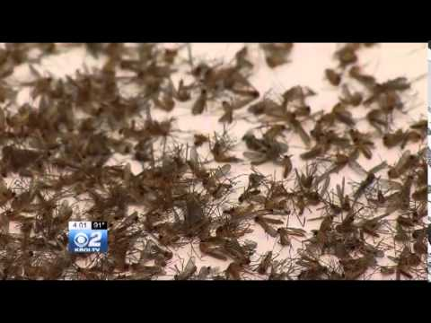 Canyon County West Nile Risk Skyrockets