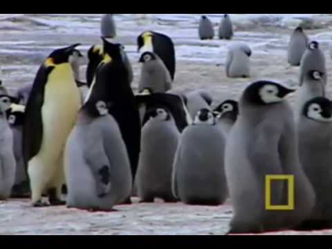 March of the Emperor Penguin