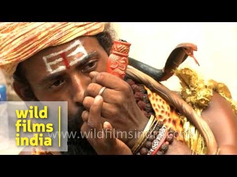 Indian sadhus on a high with chilams and dope