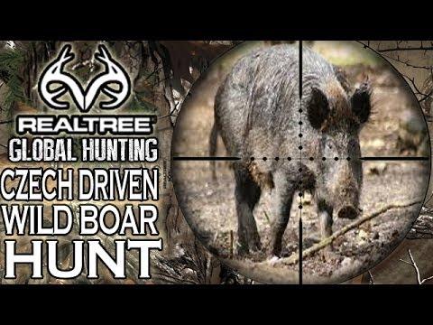 Epic Driven Wild Boar Hunt in the Czech Republic