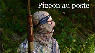 Une Saison Au Pigeons Chasse à La Palombes 2014 2015 Caméra Contour Roam2
