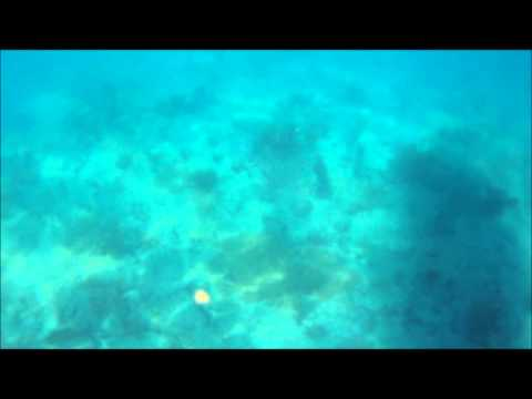 Spear fishing FL Fort Lauderdale 2012