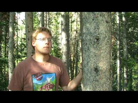 School of the Woods (Short Version)