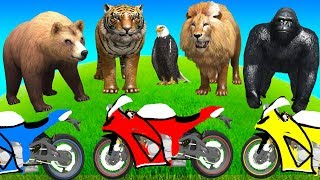 Learn Animals Names & Sound - Cartoon for Kids & Children with Learn Colors Motorcycles