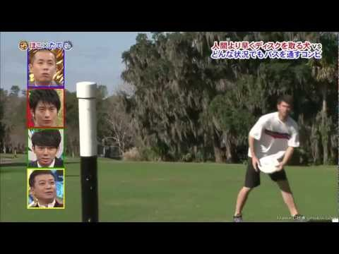 Frisbee Trick Shots | Japanese Edition | Brodie Smith