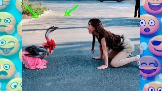 FUNNY Videos 2018 People doing stupid things  compilation#33 Try not to laugh