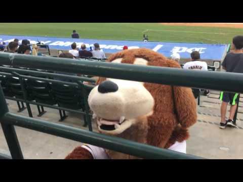 2017.7 River Dogs Baseball Game