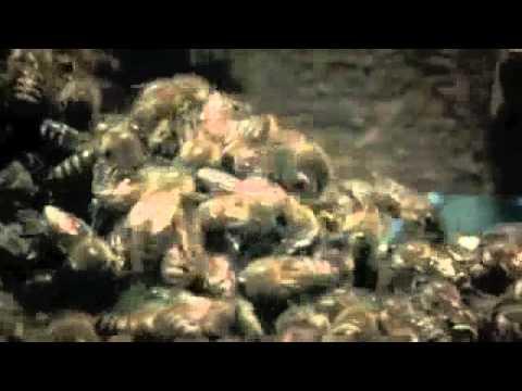 japanische bienen verteidigen stock gegen asiatische. Black Bedroom Furniture Sets. Home Design Ideas