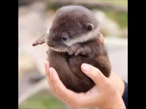 Die 10 Süßesten Tiere Der Welt