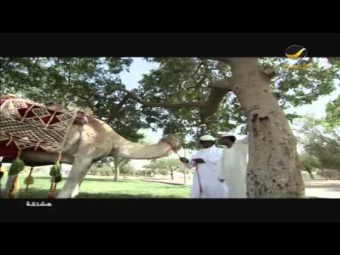 مسلسل هشتقه - الحلقه 16