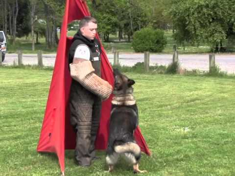 Schutzhund Protection Trial Training