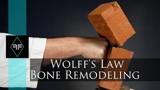 How to break rocks with your hand - Wolff's Law - Bone remodeling
