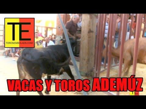TOROS Y VACAS EN ADEMUZ 2012