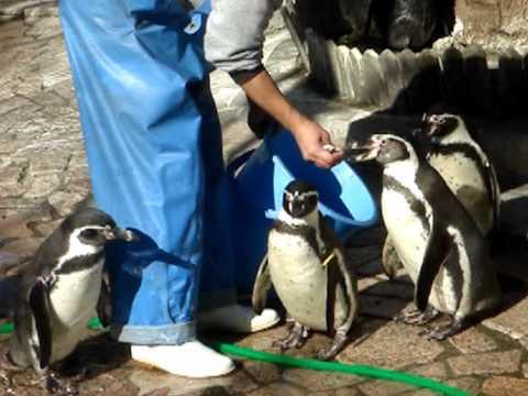 江戸川区自然動物園  ちくわ  おさかな食べるの・・