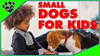 Kid Friendly Dogs - 10 Best Small Dog Breeds for Kids Children
