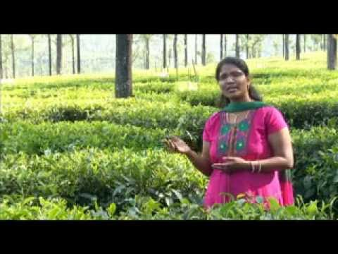 Sumai  Thangi Yesu philomina -daughter Of  Pr.moses Rajasekar. Song.flv video