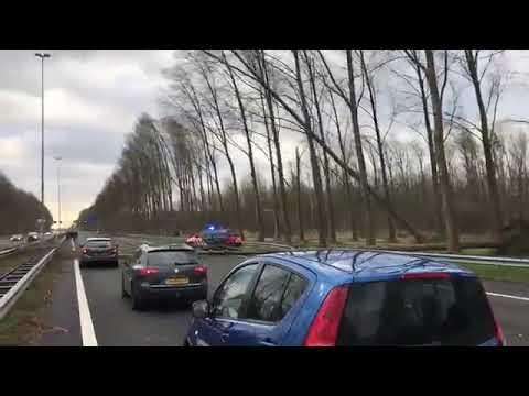 Boom valt op auto Marechaussee snelweg A2 bij Best - Storm 18 januari
