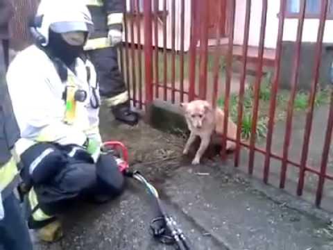Rescate de Bomberos a un perro atrapado en una reja conmociona en la web