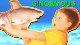 Giant Growing SHARK TOYS | Ginormous Grow Shark | Toy Sharks Videos for Kids