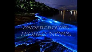 UNDERGROUND WORLD NEWS LIVE
