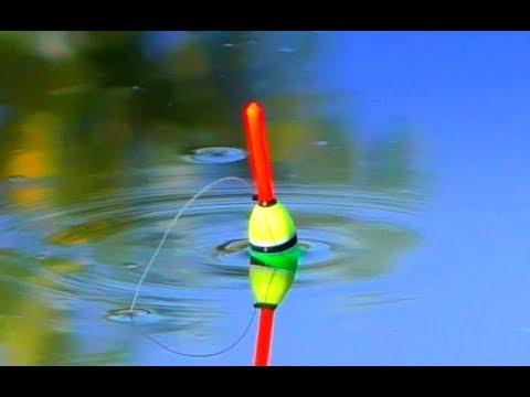 Рыбалка на карася + закидушки (донки) на сазана. Эксперимент: какой жмых лучше?